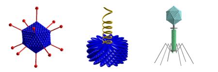 Erinevaid viiruste ehitustüüpe: ikosaeedriline, spiraalne, faagikujuline