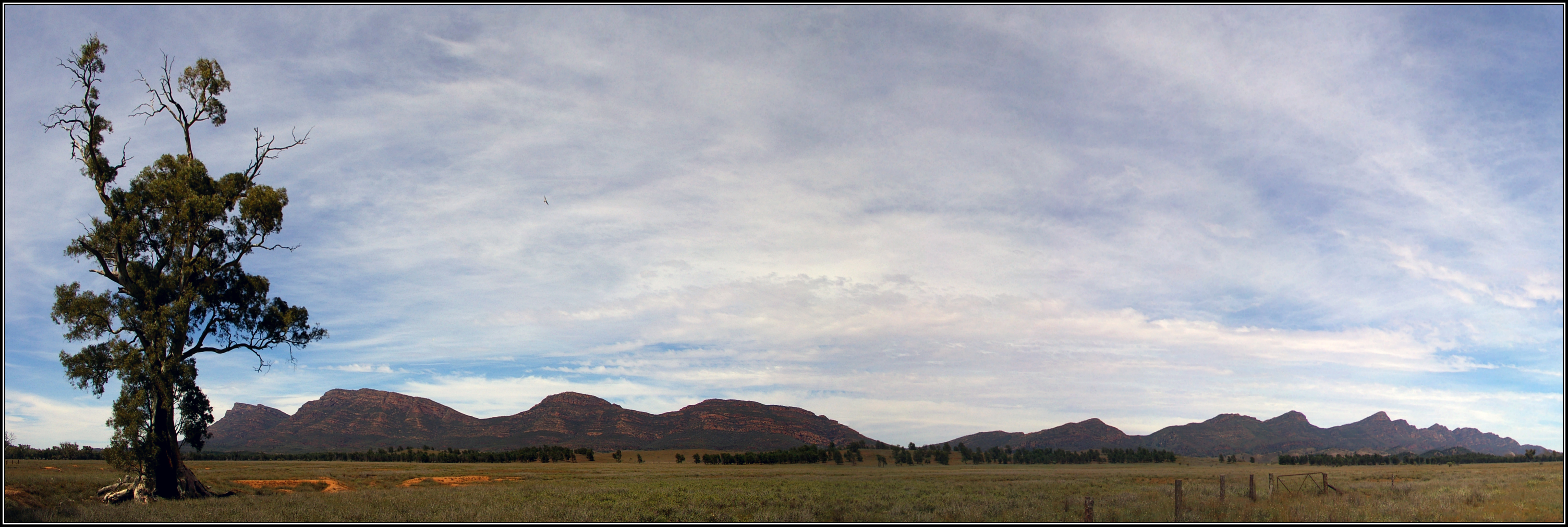 Filepanorama showing the cazneaux tree with wilpena pound in the filepanorama showing the cazneaux tree with wilpena pound in the backgroundg voltagebd Images