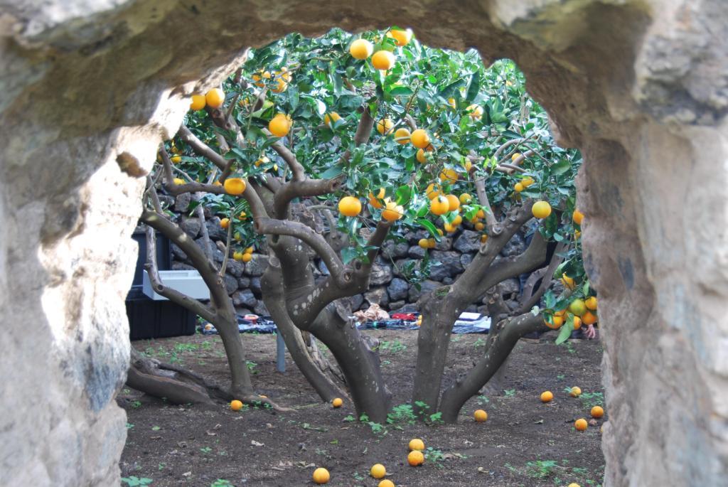 Giardini panteschi wikipedia - Muretti da giardino ...