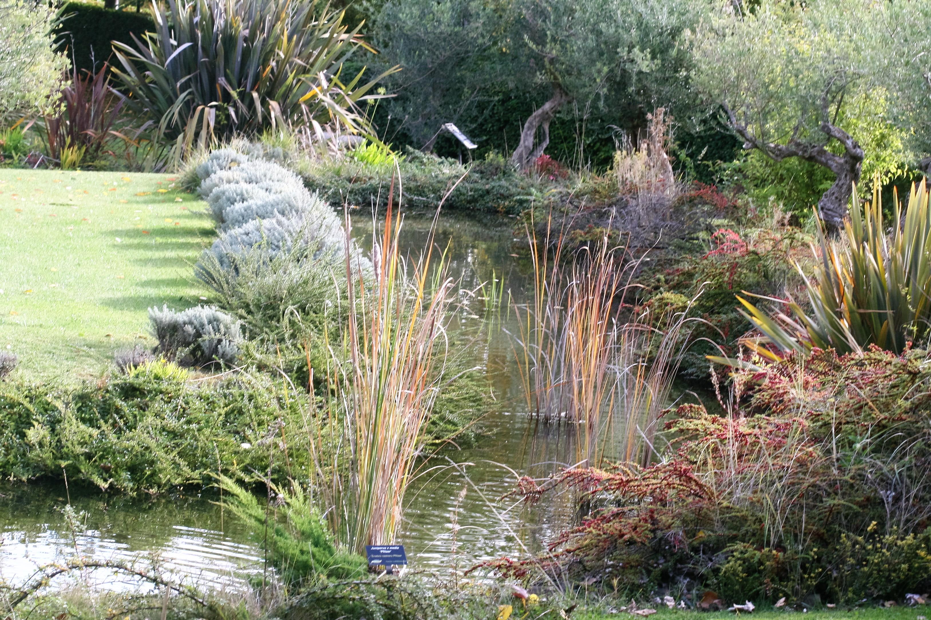 Estanques pequeos de jardin hacer un pequeo estanque en for Estanque artificial en casa