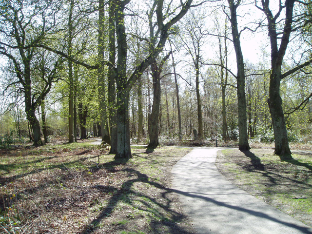Plean Country Park - geograph.org.uk - 160347