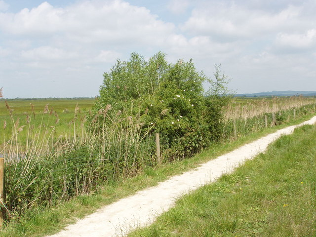 Rose bush and RSPB visitor trail on Otmoor - geograph.org.uk - 182148