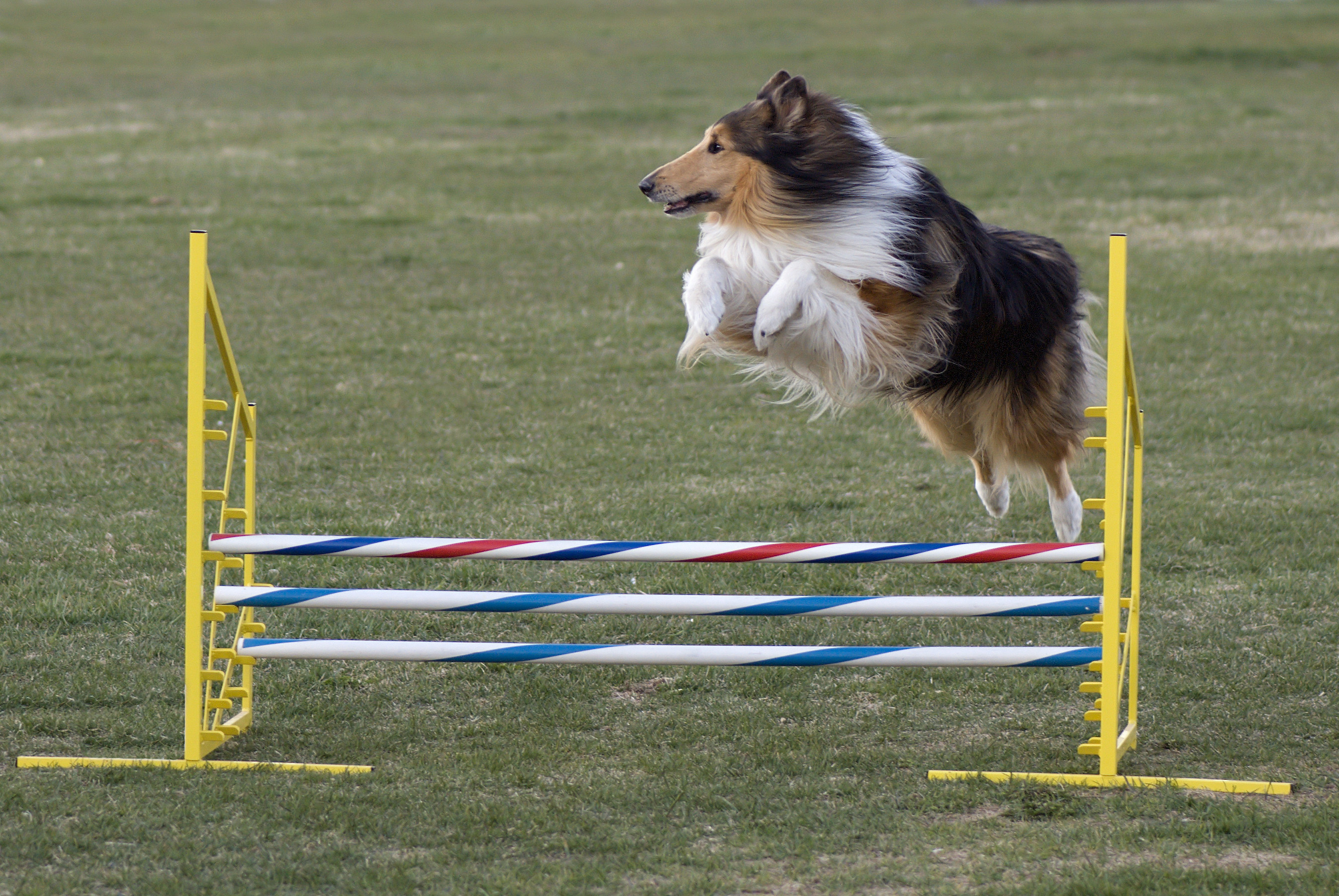 What Is Agility Training For Dogs