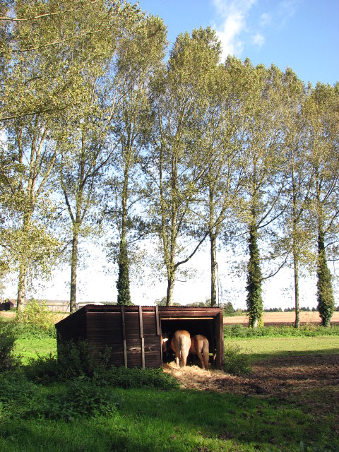 File:Shelter In Horse Pasture