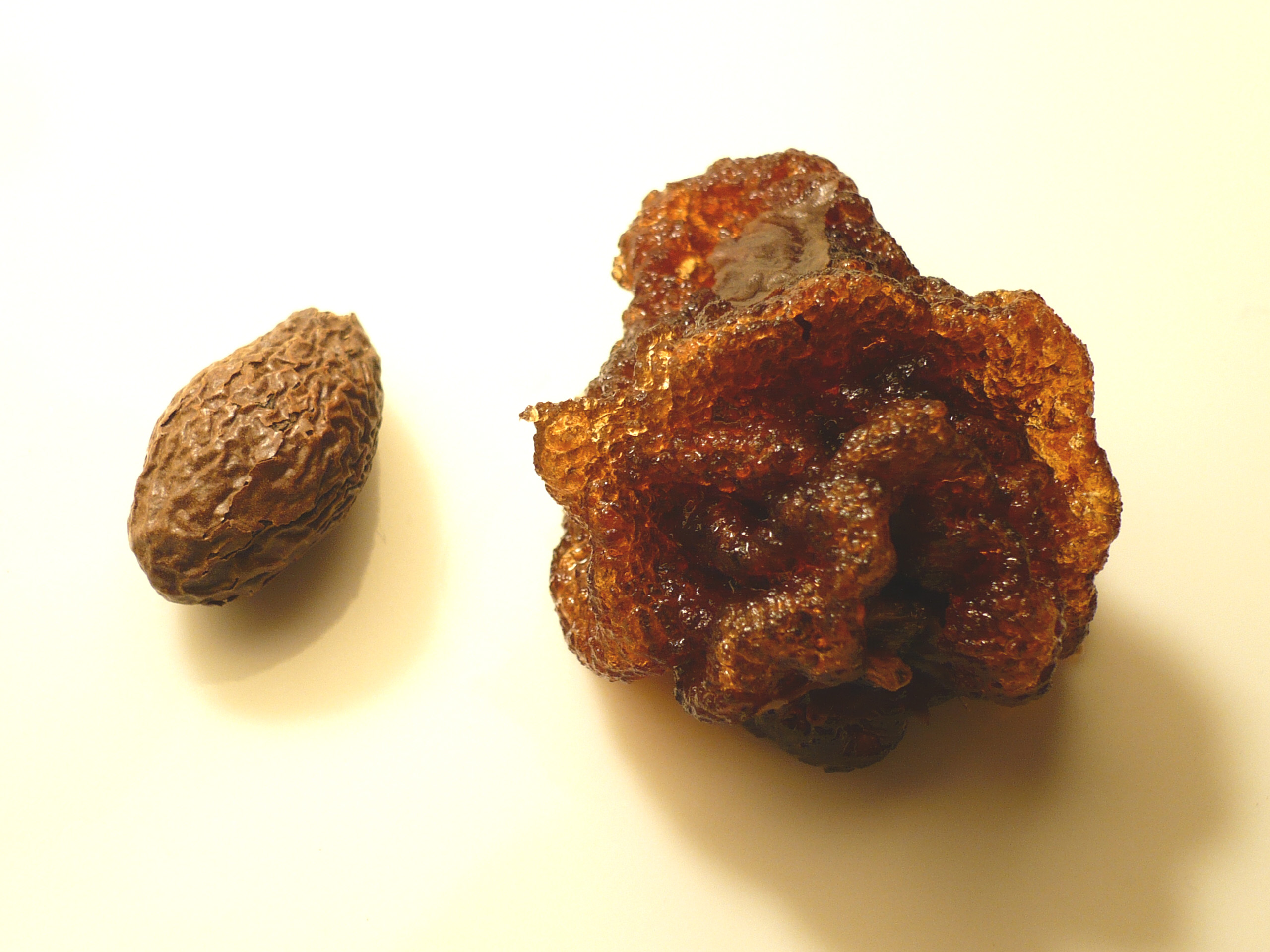 http://upload.wikimedia.org/wikipedia/commons/a/a6/Sterculia_lychnophora_seed.jpg