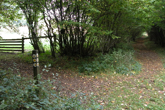 The Wardens Way in Guiting Wood - geograph.org.uk - 67451