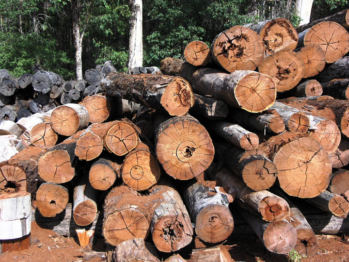 Timber in storage for later processing at a sawmill.