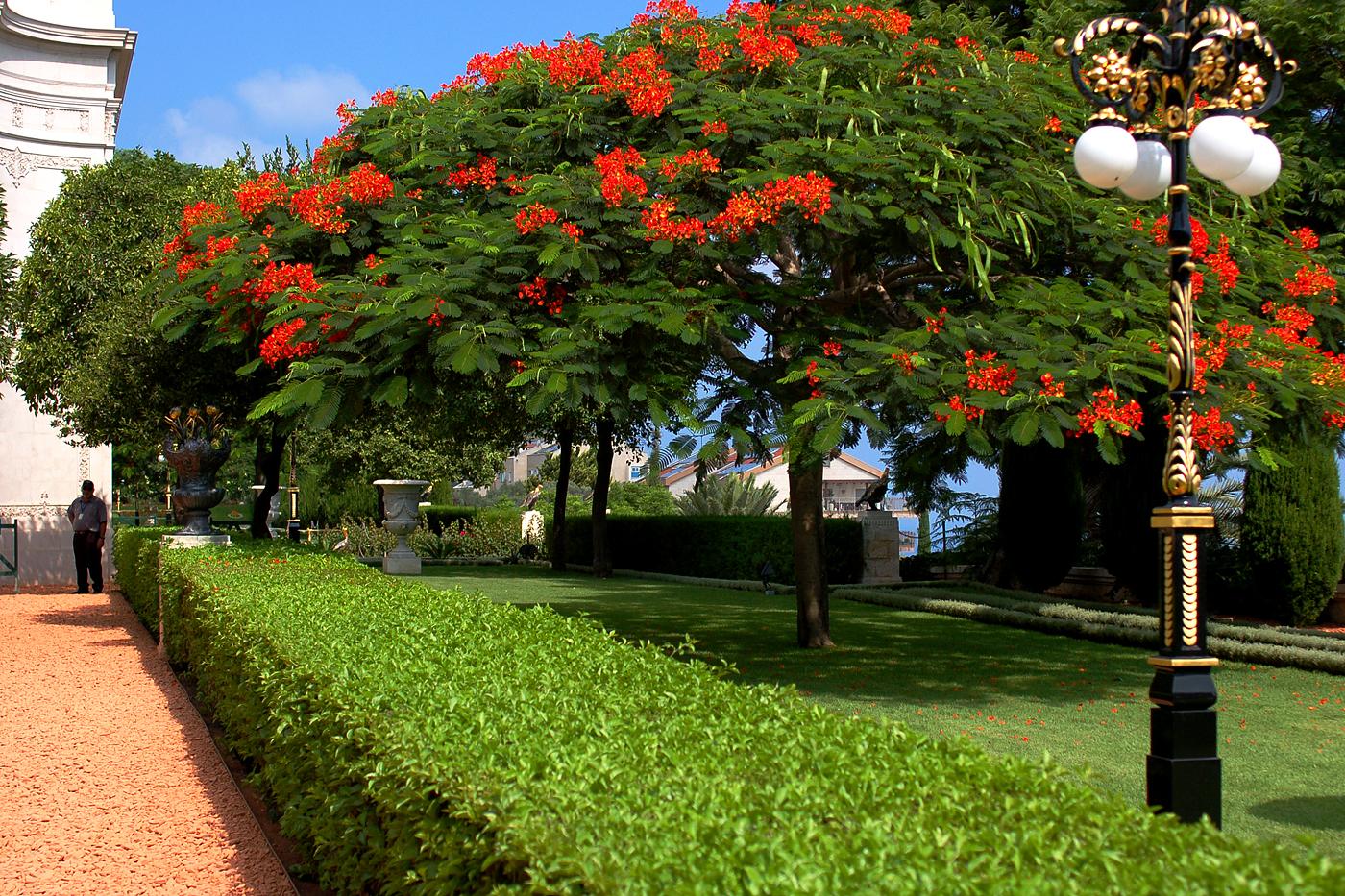 File Tree In Bahai Garden 2 Jpg Wikimedia Commons