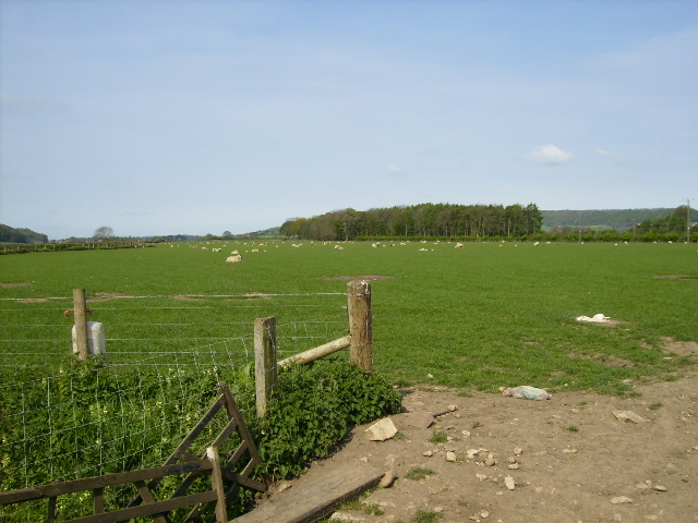 View to Mill Holm Plantation from The Ebor Way - geograph.org.uk - 415994