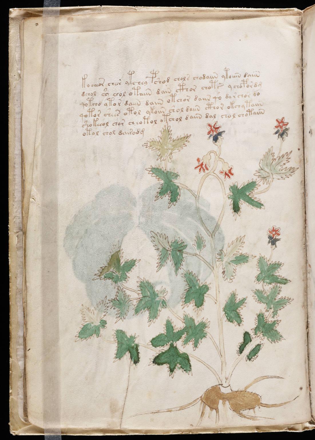 https://upload.wikimedia.org/wikipedia/commons/a/a6/Voynich_Manuscript_%2812%29.jpg