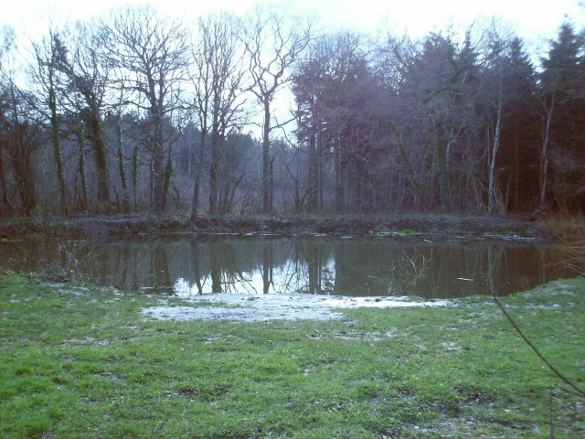 Winding Pond, Clowes Wood - geograph.org.uk - 371873