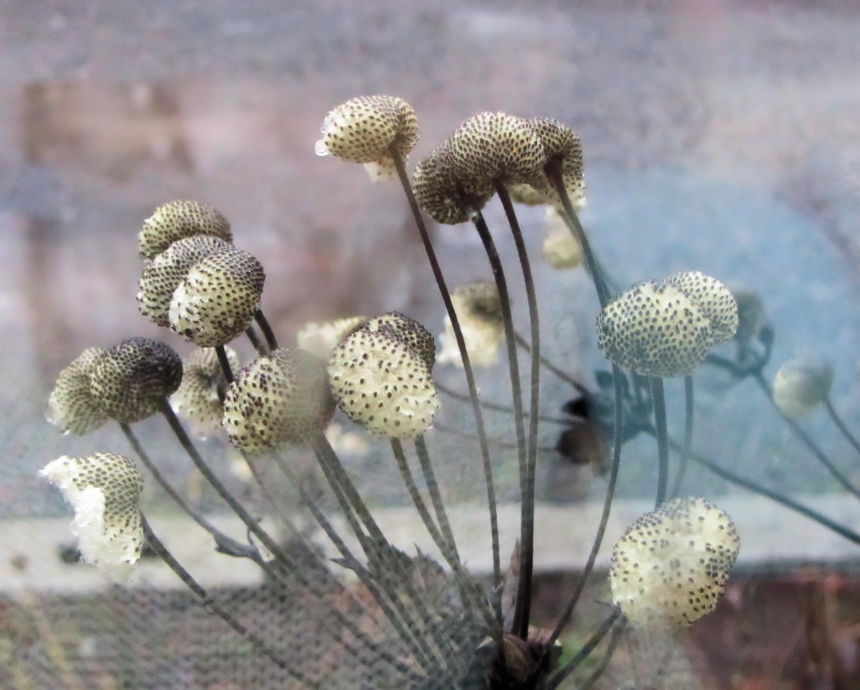 kaisaniemen kasvitieteellinen puutarha kahvila Rauma
