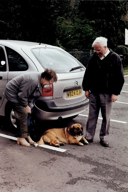 File:Avoca - Town dog greeting Bally K fans at parking lotavoca town