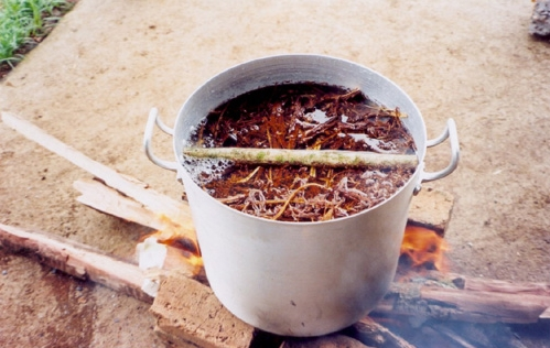 Banisteriopsis-caapi-cooking