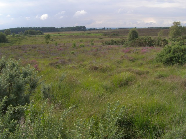 File:Bisterne Common from Lugden Barrow, New Forest - geograph.org.uk - 501432.jpg