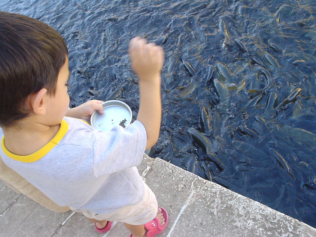 File child feeding wikimedia commons for How to feed fish