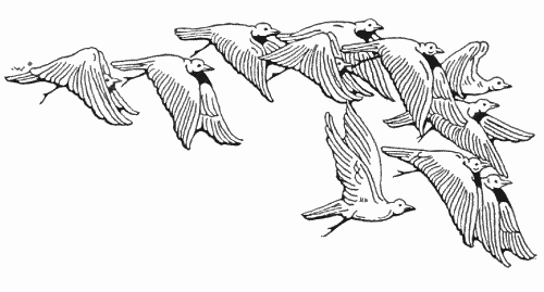 BIRD coloring pages  90 free birds coloring pages amp birds
