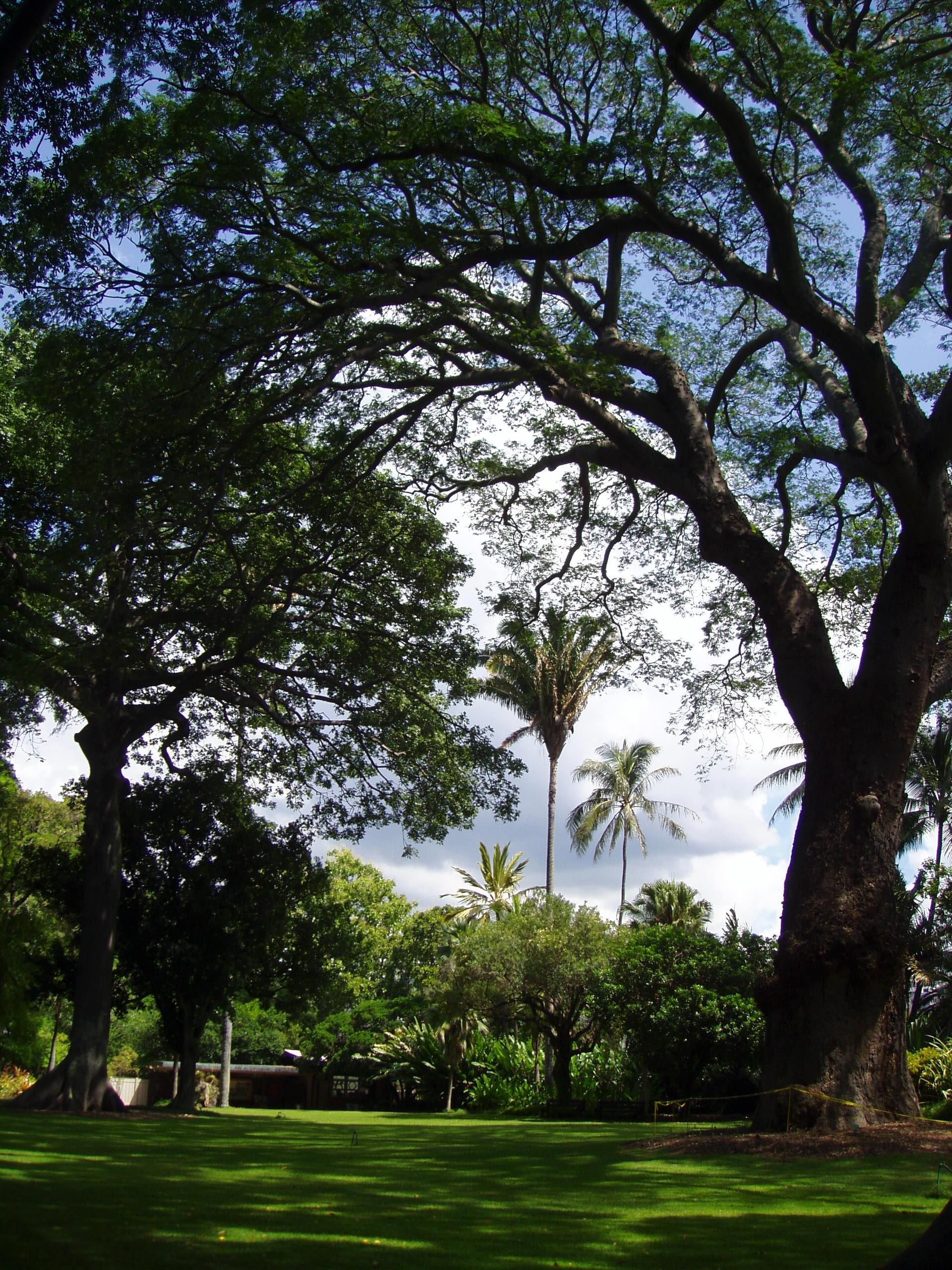 Image Result For Foster Botanical Garden