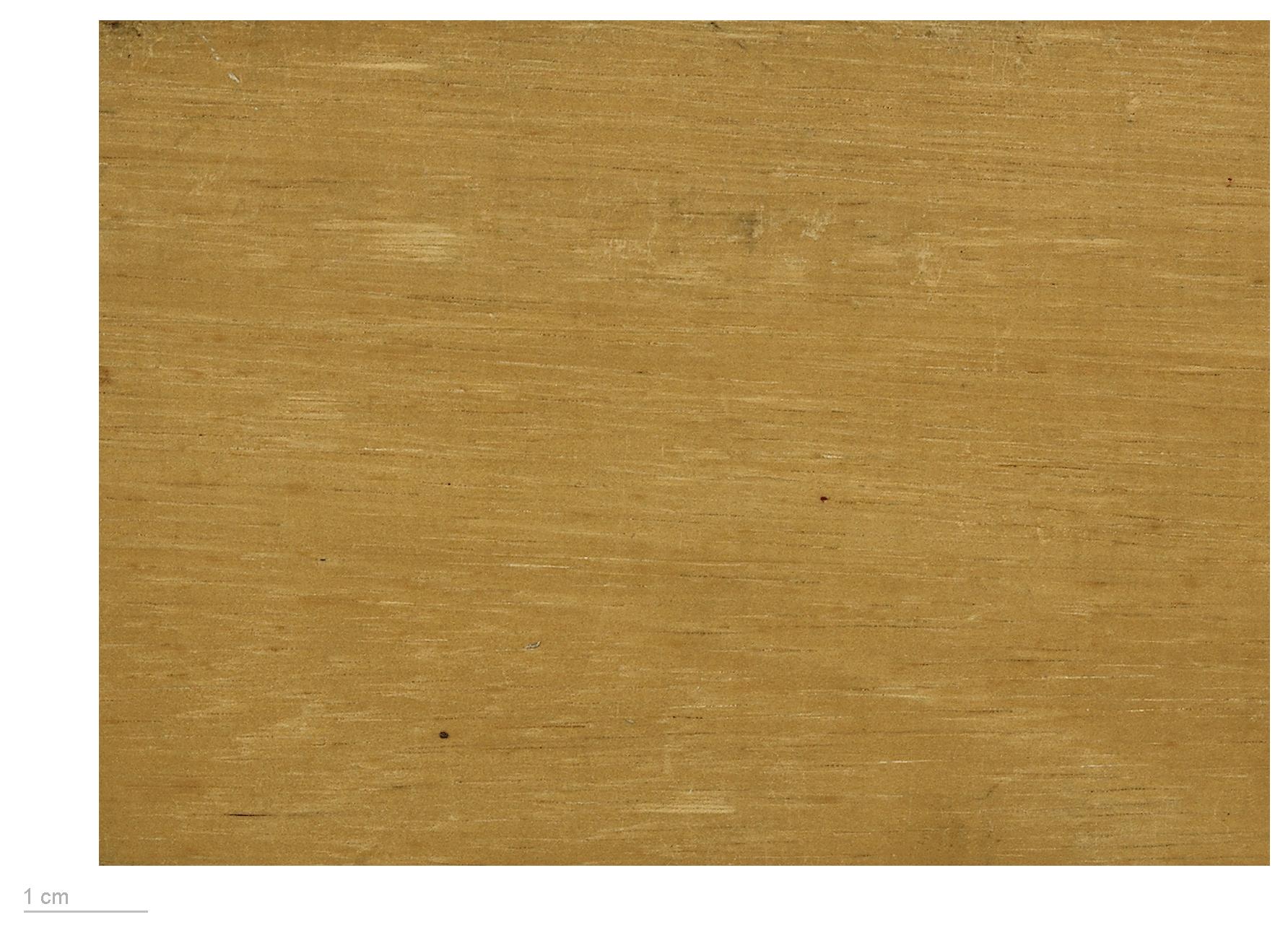Comment Fabriquer Des Plinthes En Bois ramin (bois) — wikipédia