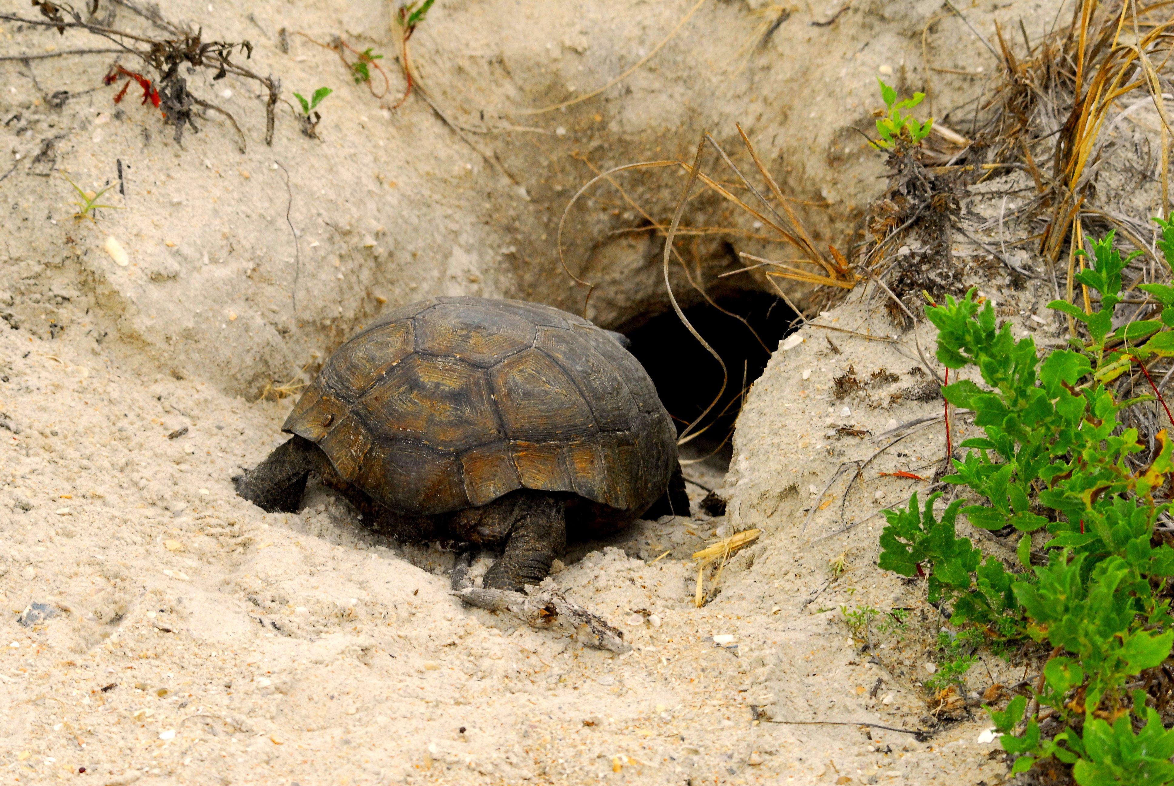 спячка черепах в картинках нижней части