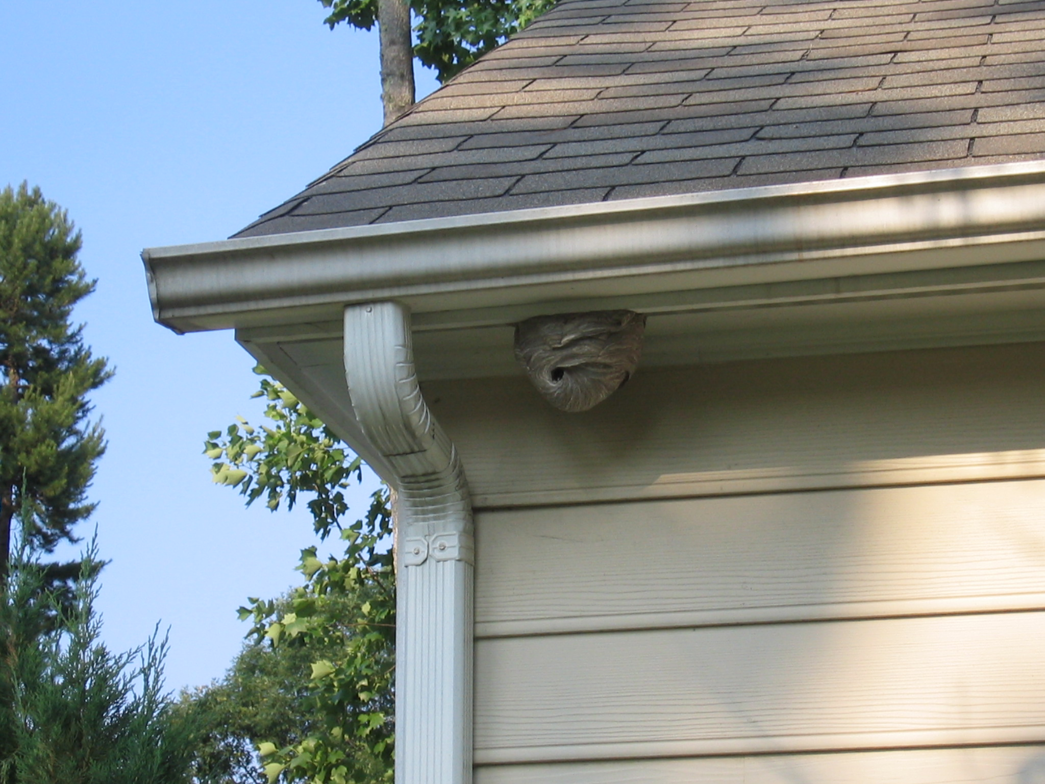 Hornet nest removal by your house