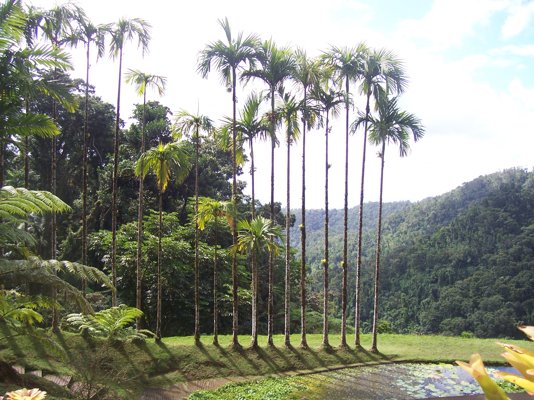 Jardin de balata for Aspersores para riego de jardin
