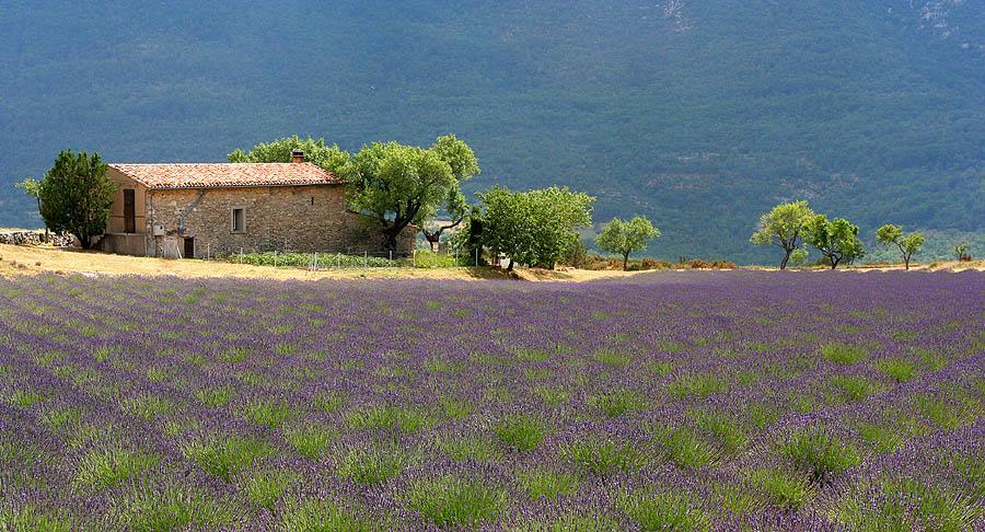 File:Landscape Provence France 1.jpg  Wikimedia Commons