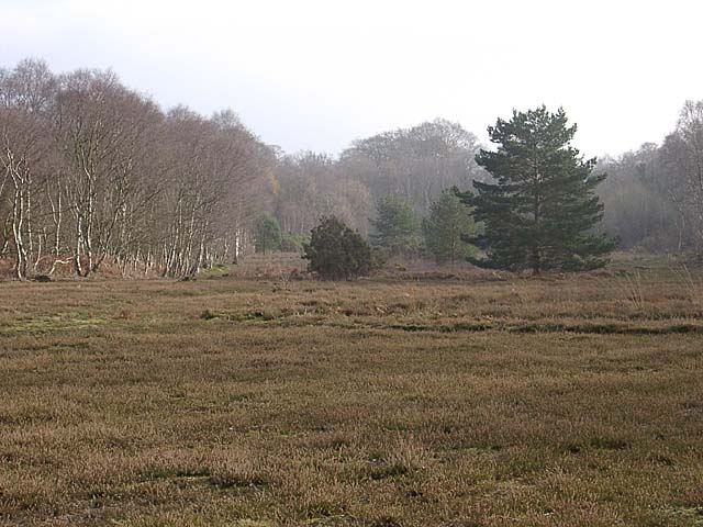 Little Budworth Common - geograph.org.uk - 59838