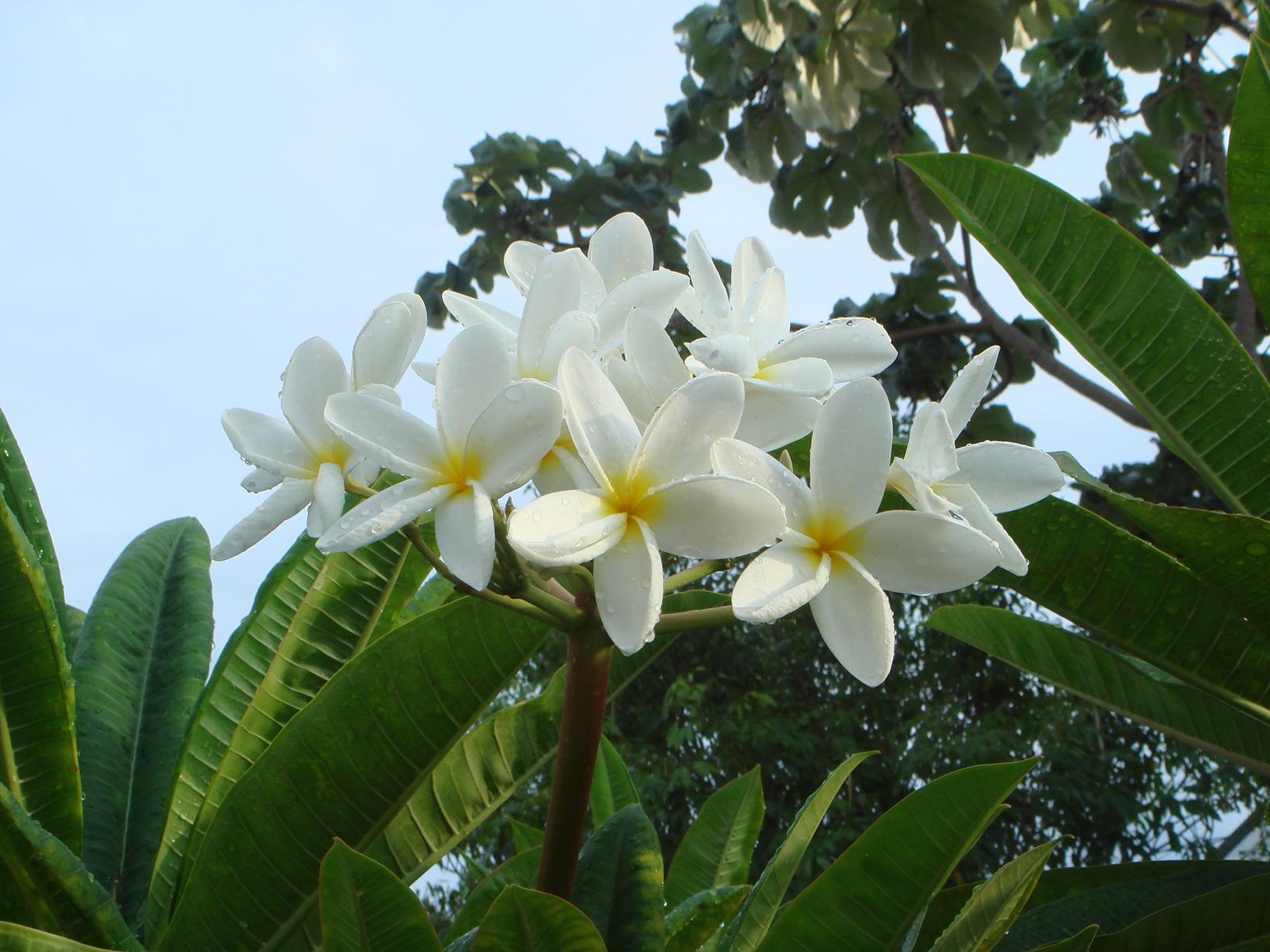 Flores Gigantes Para Decorar Goma Eva