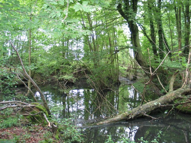 Pond, Northaw Great Wood - geograph.org.uk - 448401