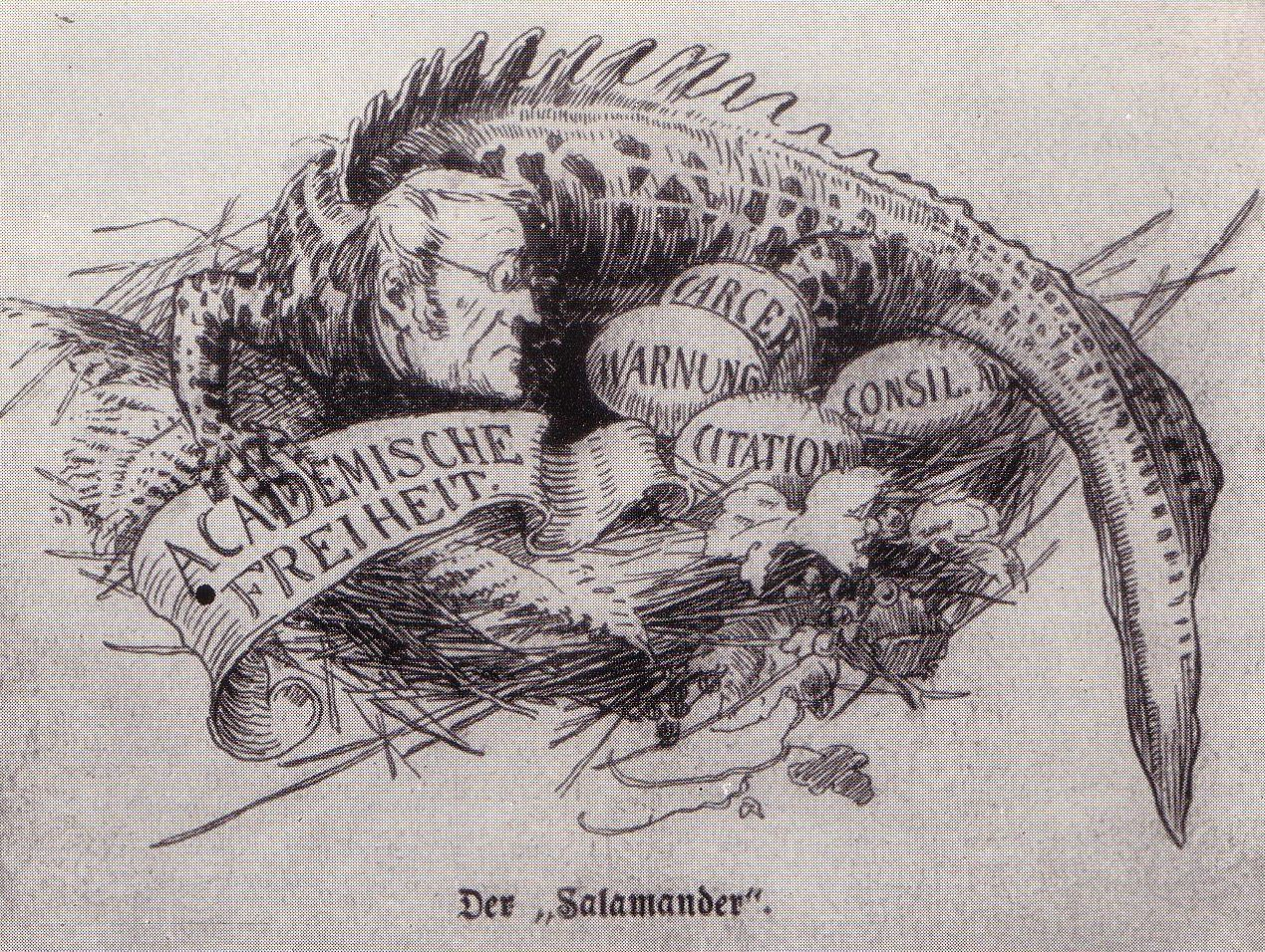 File Salamander Salomon.JPG - Wikimedia Commons 1f212c79f6