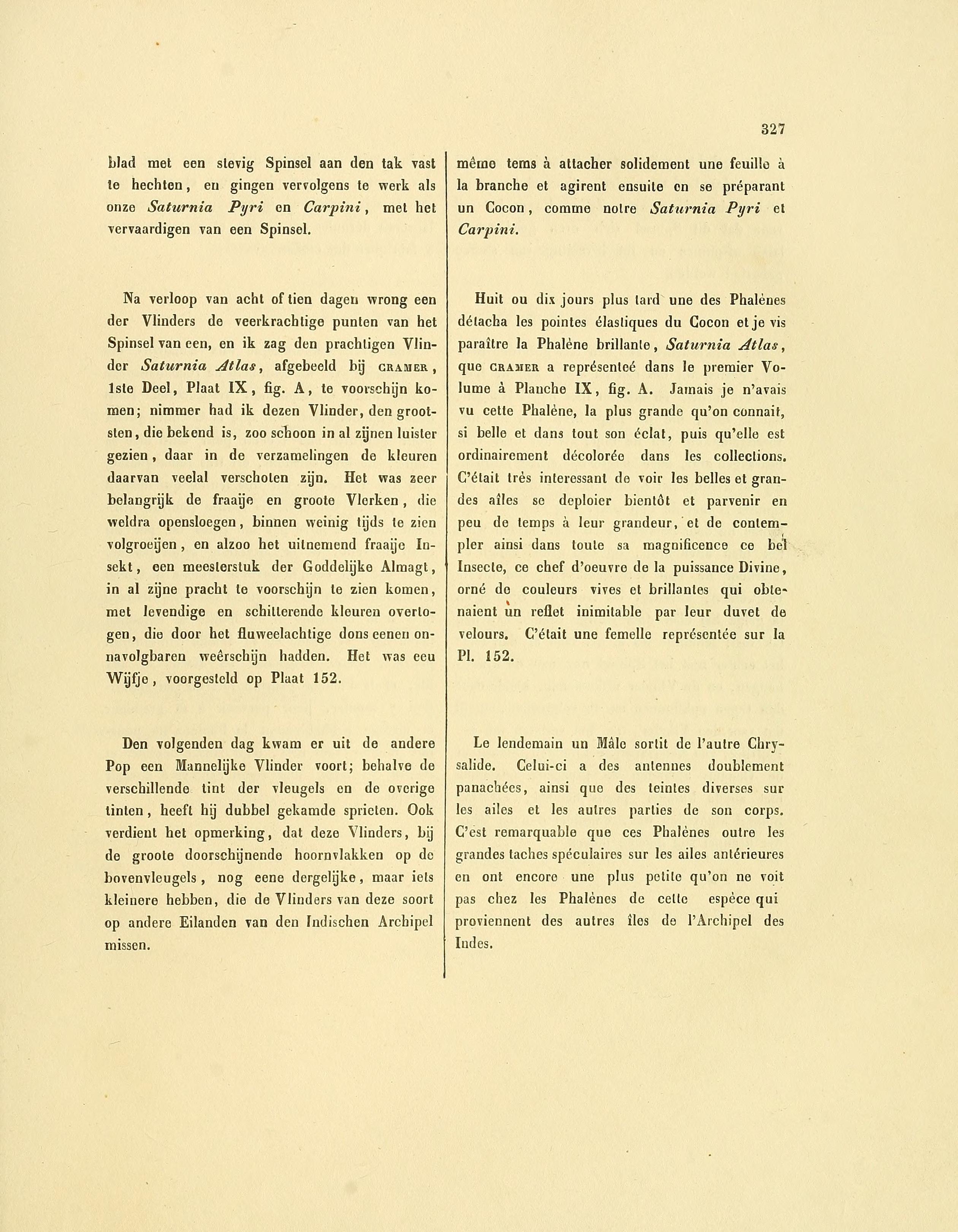 Filesepp Surinaamsche Vlinders Pl 151 152 Text3 Attacus