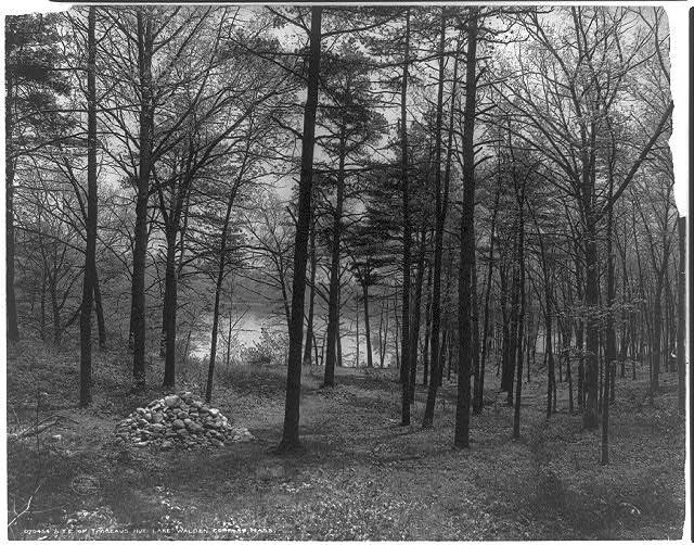 Site Thoreau Cabin Loc.