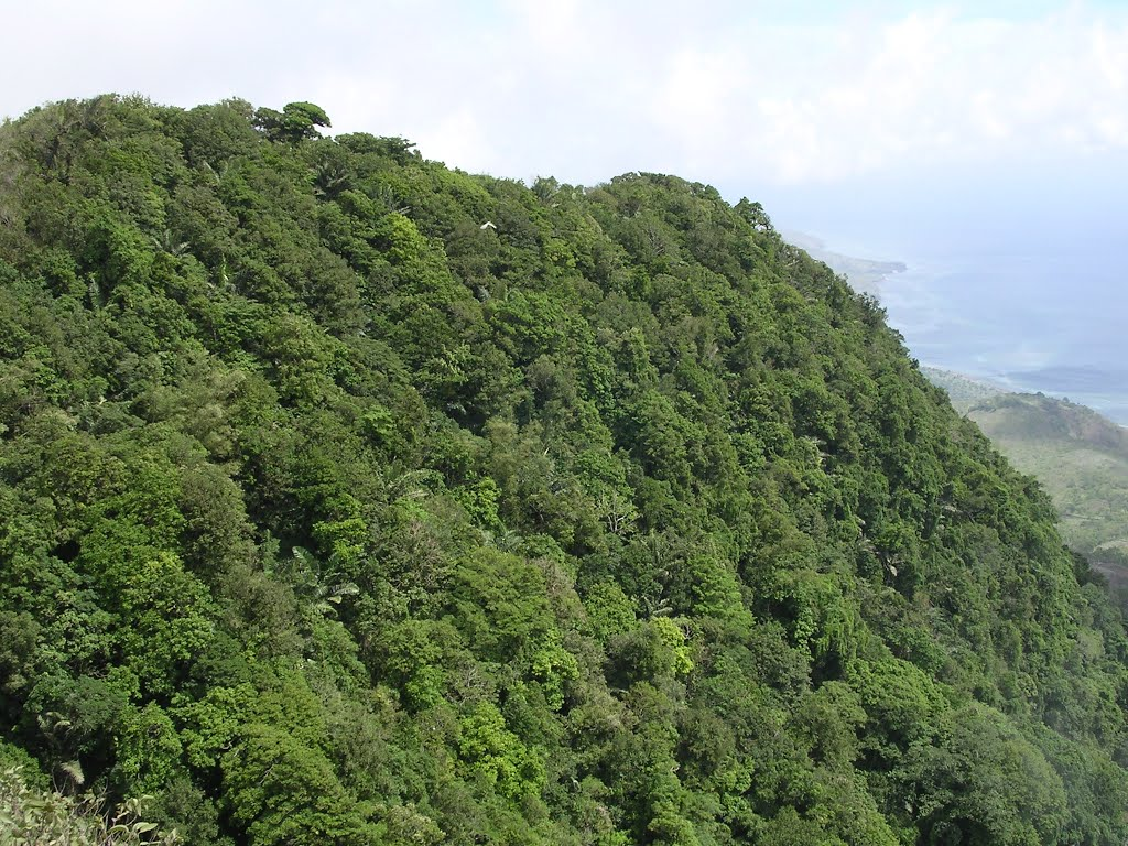 File Well Developed Tropical Evergreen Forest Looks Lush