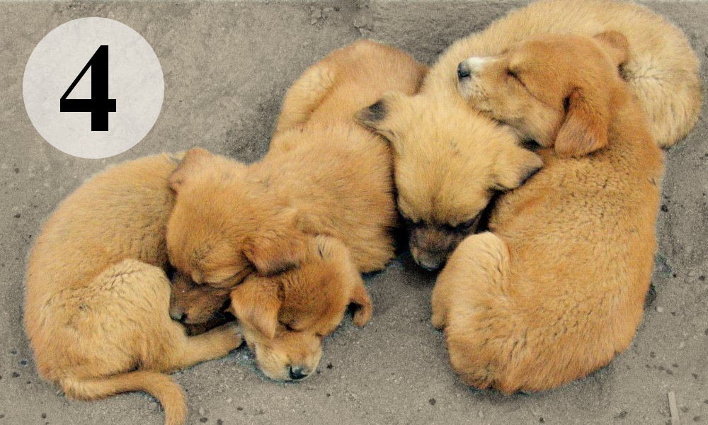 4 puppies.png