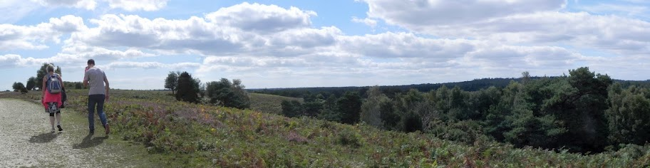 The path and view across Acres Down in the New Forest, one of the few places in which it is possible to see a European honey buzzard.