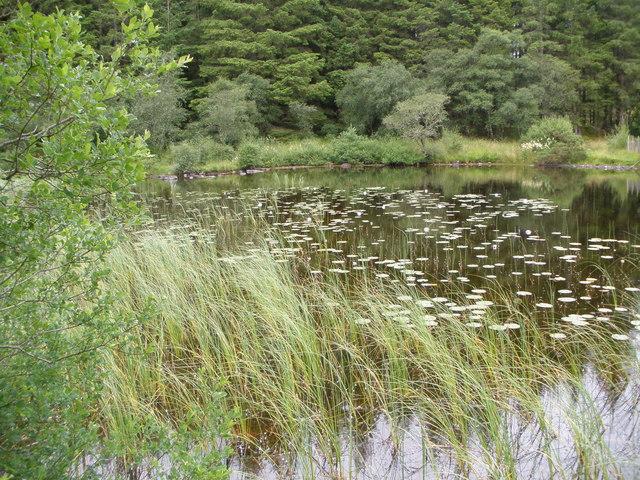 File:Bay in Loch Achaidh na h-Inich - geograph.org.uk - 1407015.jpg