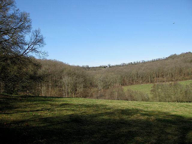 Bear's Wood - geograph.org.uk - 1205815