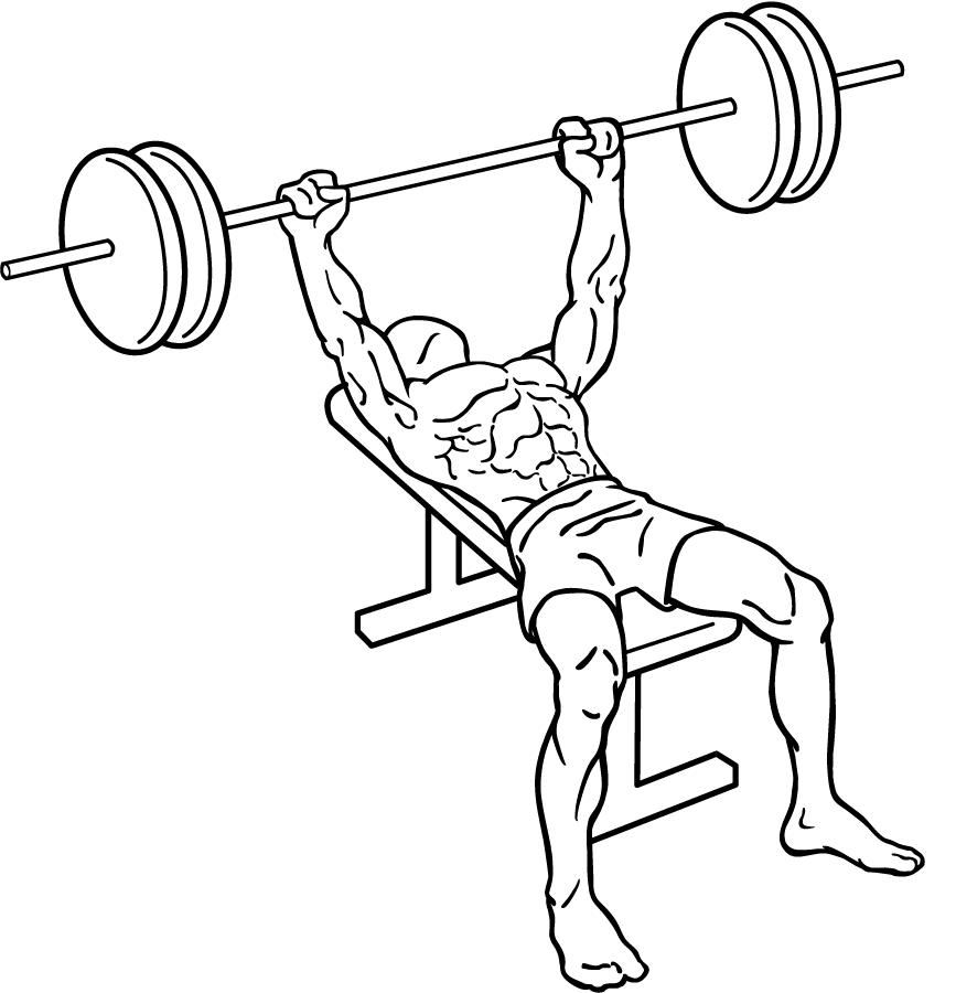 Image Result For Bicep Workout