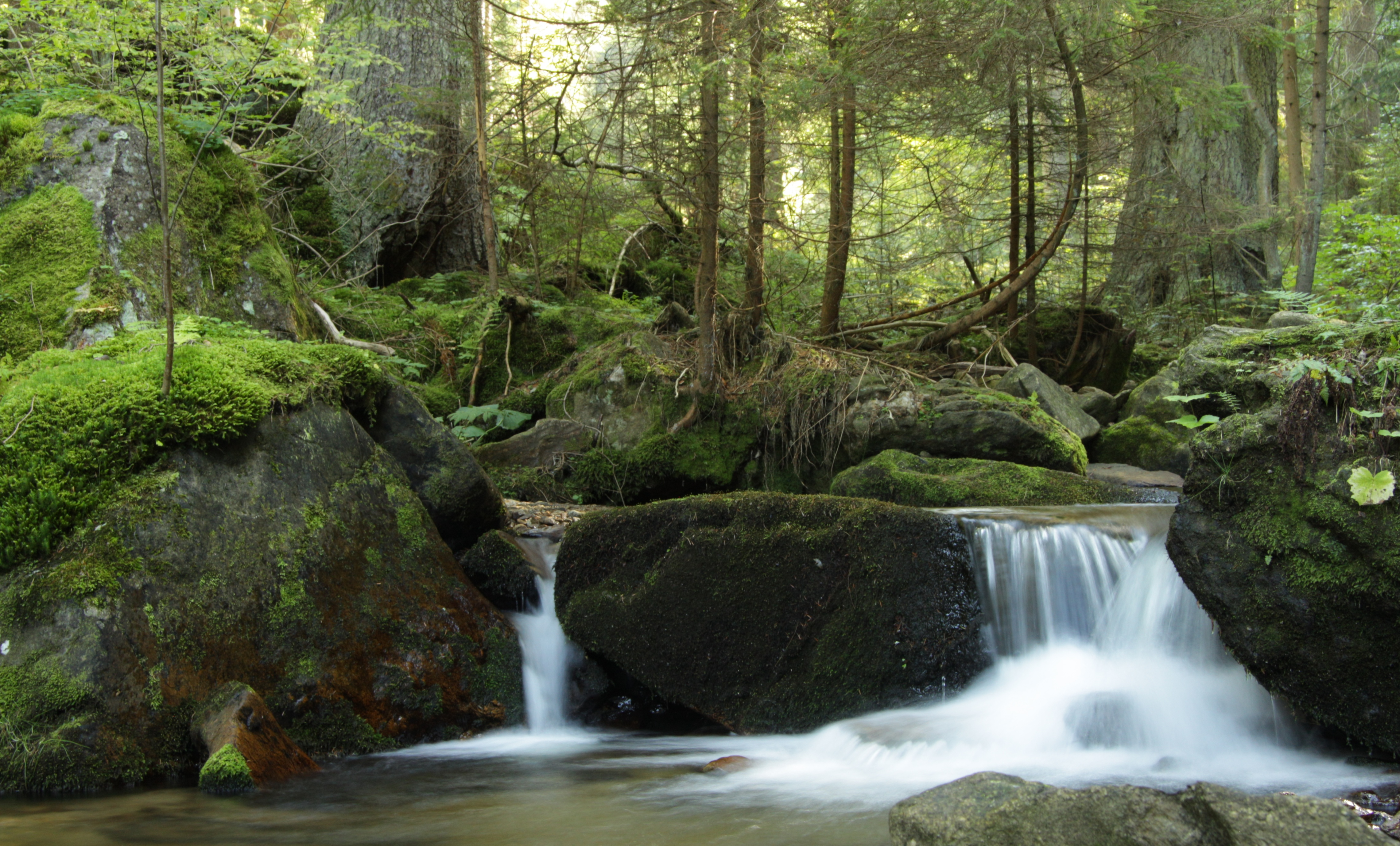 Nature It S Like Art Poems Music Aroung Us