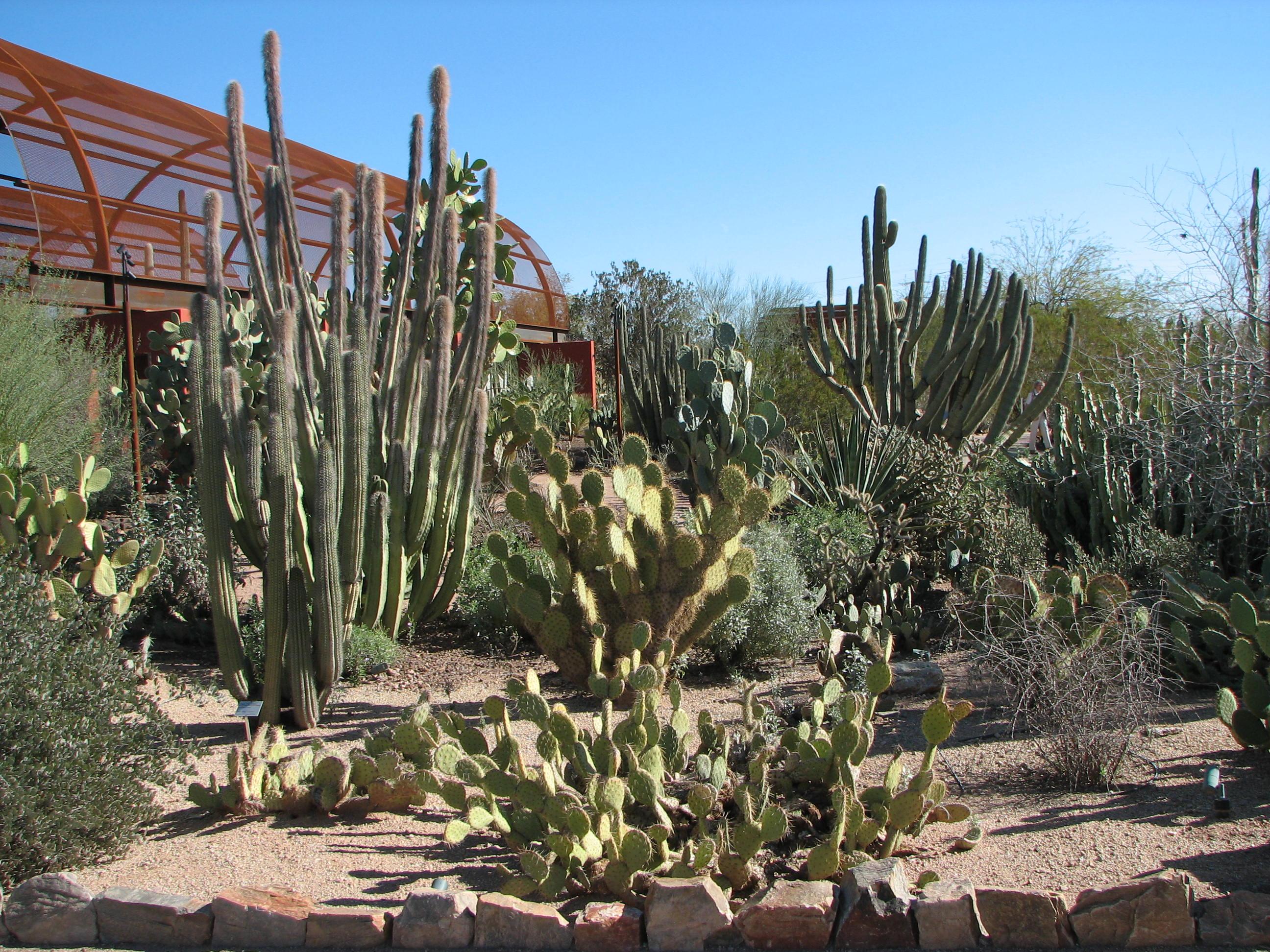 File:Cacti, Desert Botanical Garden