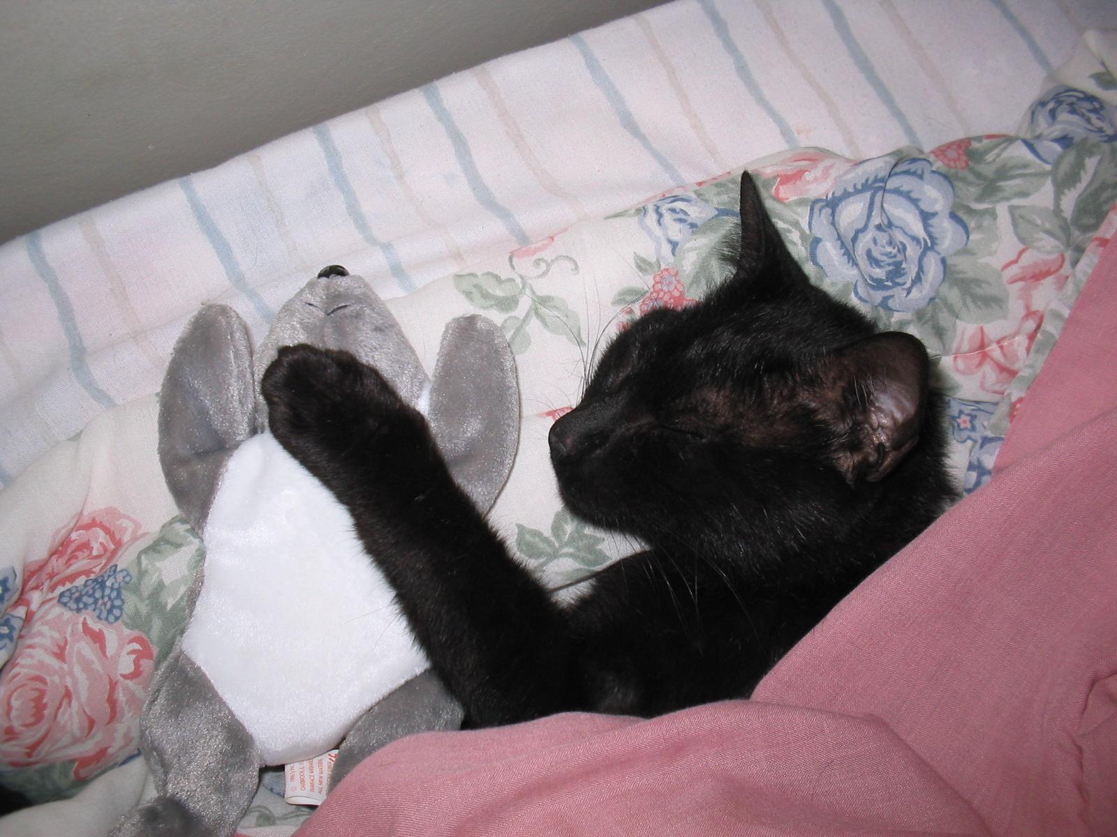 Растолковать сон нападающая чёрная кошка