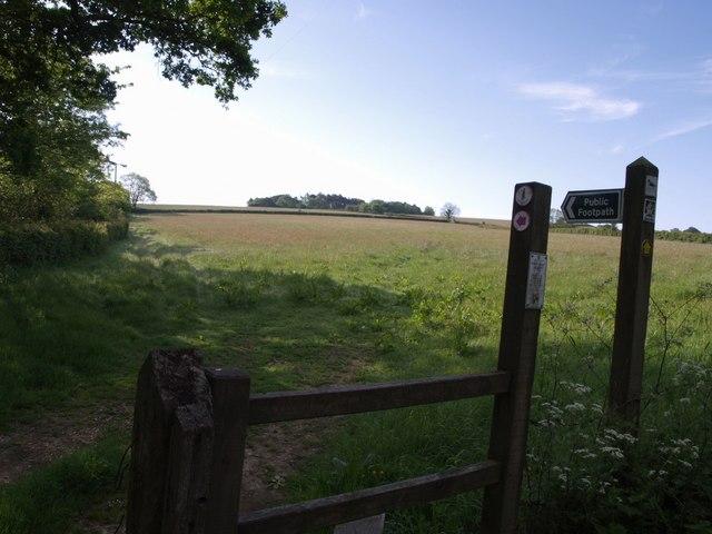 East Devon Way near Hartgrove Farm - geograph.org.uk - 450131