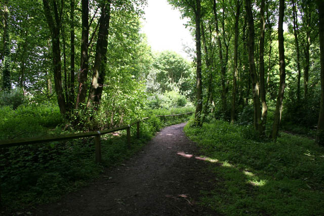 Footpath in Bestwood Country Park - geograph.org.uk - 1340429