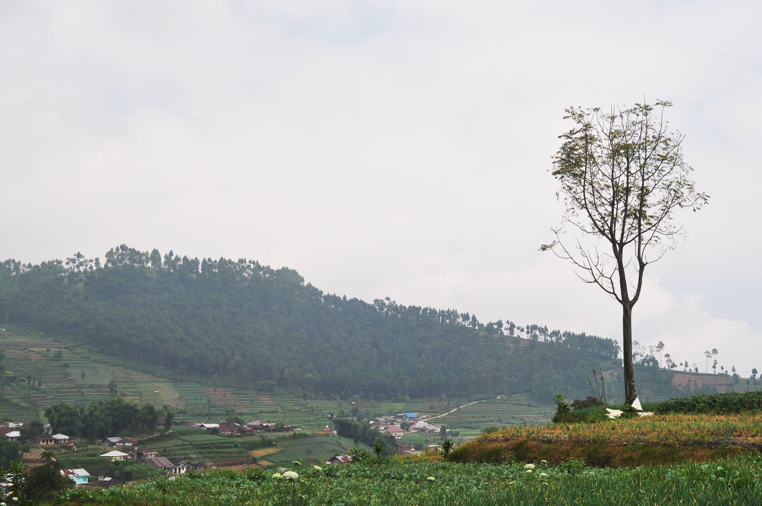 63+ Gambar Pemandangan Di Desa
