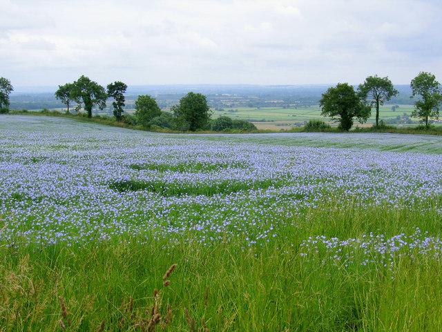 File:Fragrant fields near Hawkesbury - geograph.org.uk - 173212.jpg