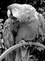 Grayscale 2bit palette sample image - gimp dithered.png