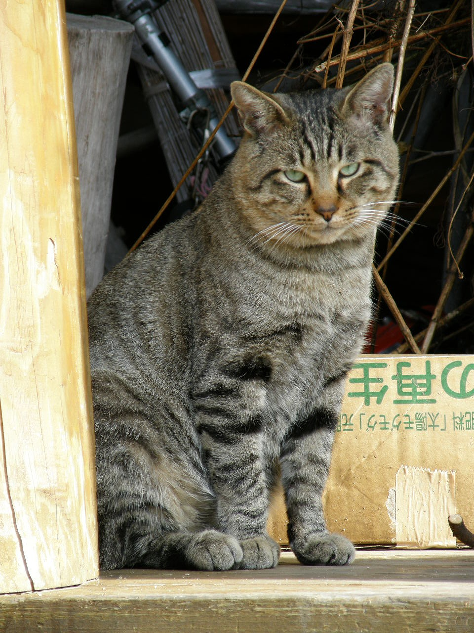 http://upload.wikimedia.org/wikipedia/commons/a/a8/Homeless_cat_%E9%87%8E%E8%89%AF%E7%8C%ABC102574.jpg