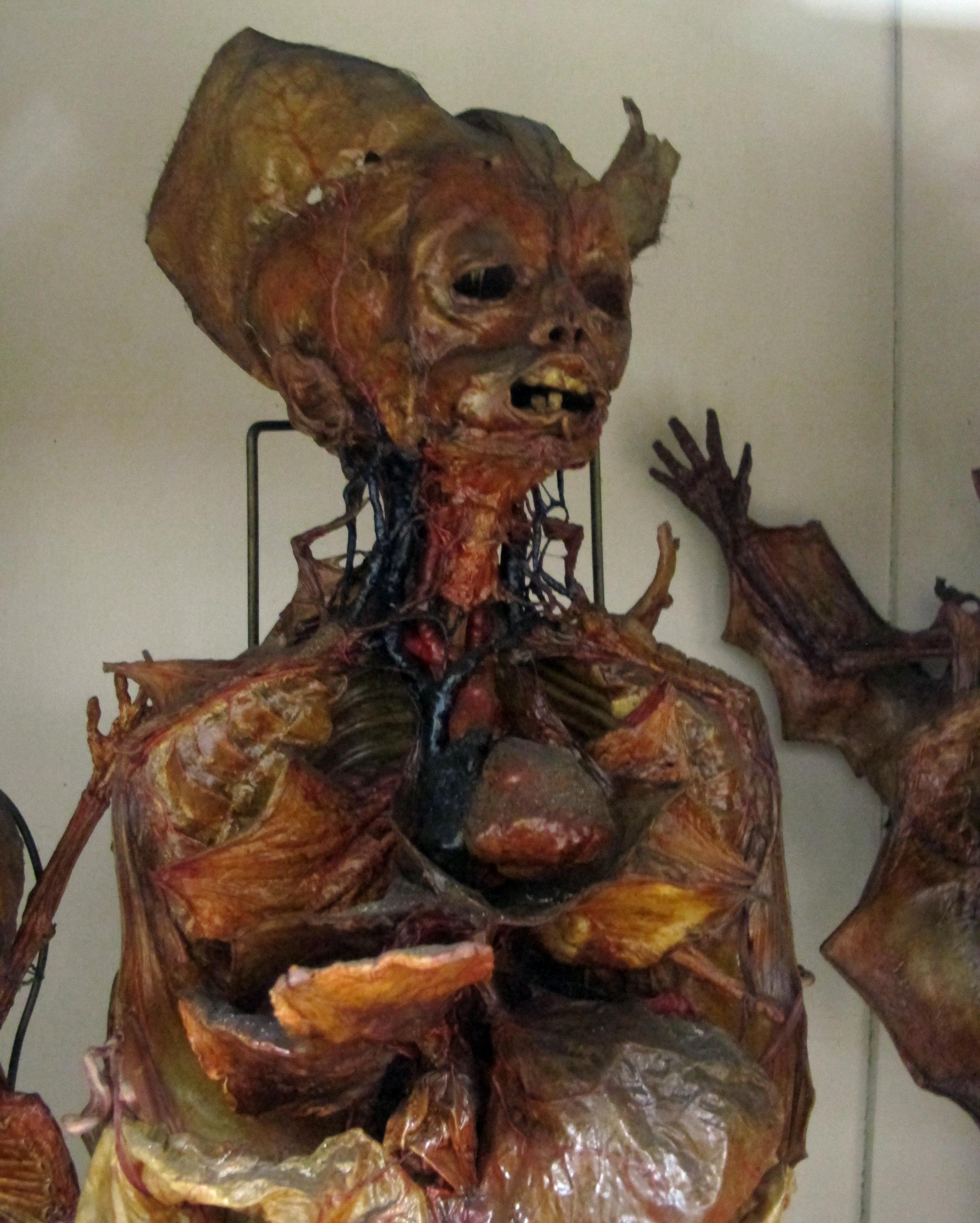 File:Istituto di anatomia umana normale, museo, campioni di tessuti ...