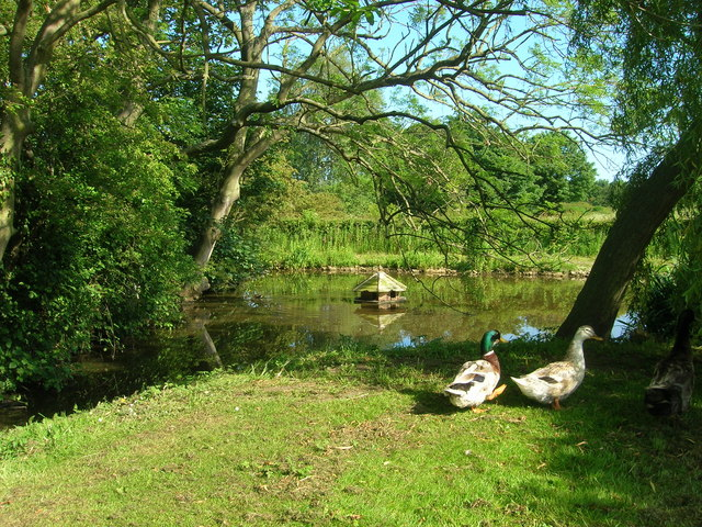 Muston Duck Pond - geograph.org.uk - 1354076